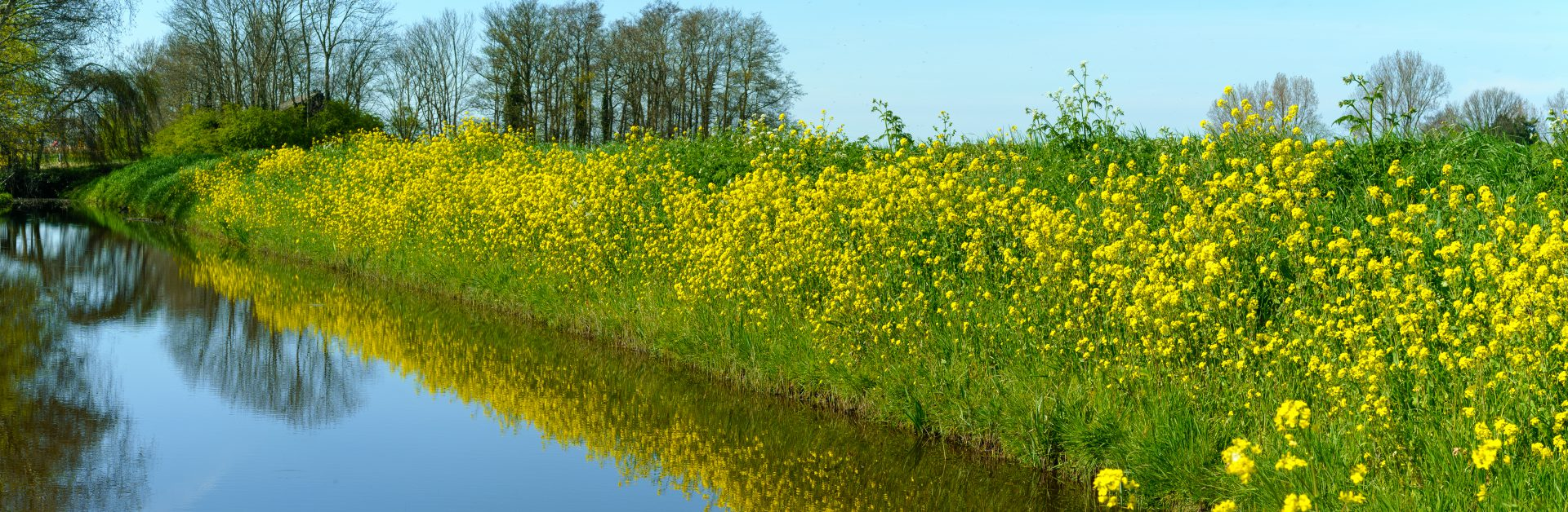 Waterside,View,With,Yellow,Canola,Flowers,In,The,Grass